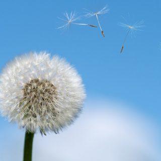 Kreuzallergie erkennen: Ursachen, Symptome und Behandlung